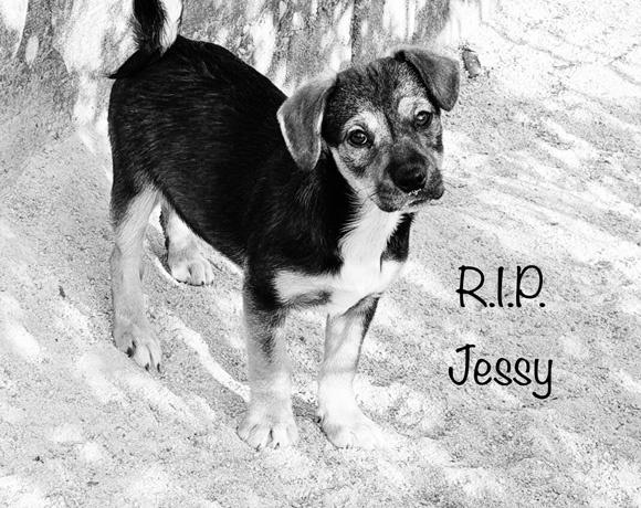 Jessy †