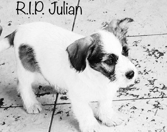 Julian †