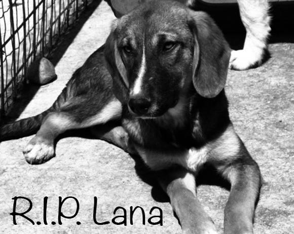 Lana †