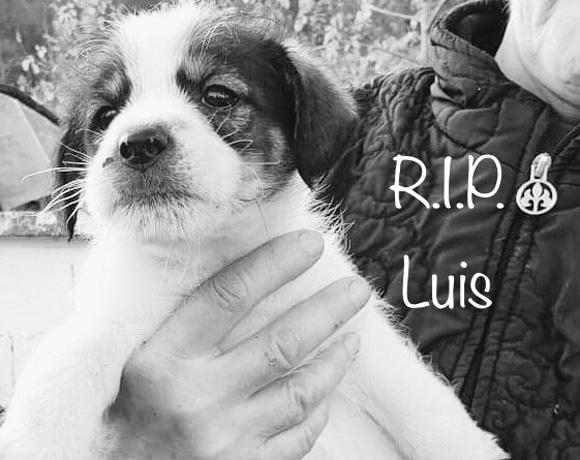 Luis †