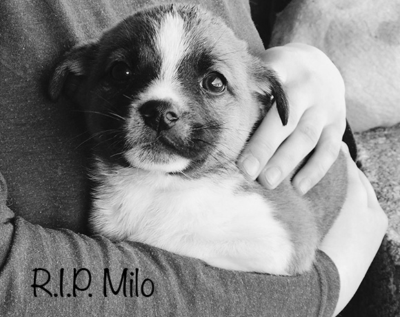 Milo †