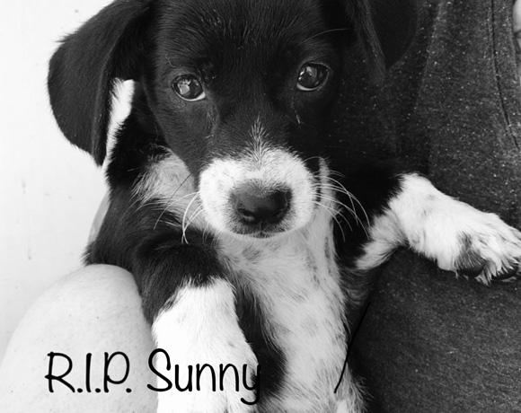Sunny †