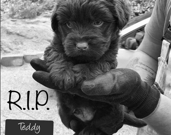 Teddy †