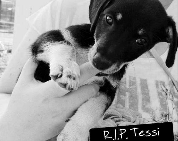 Tessi †