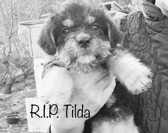 Tilda †