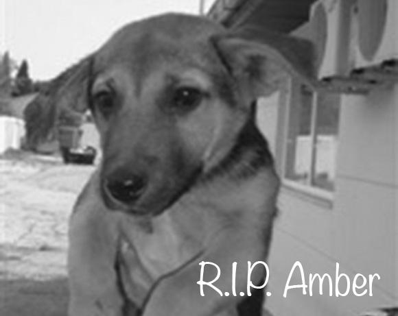 Amber †