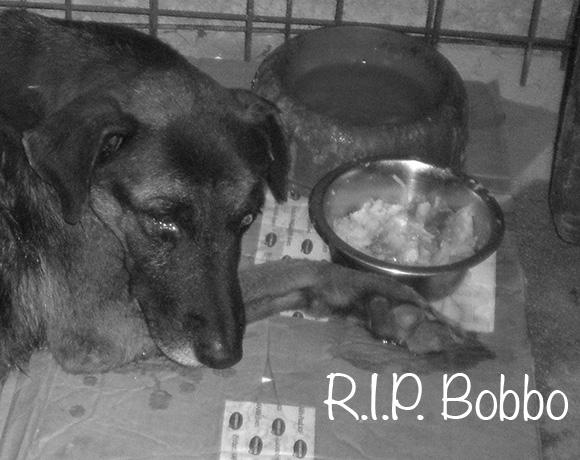 Bobbo †