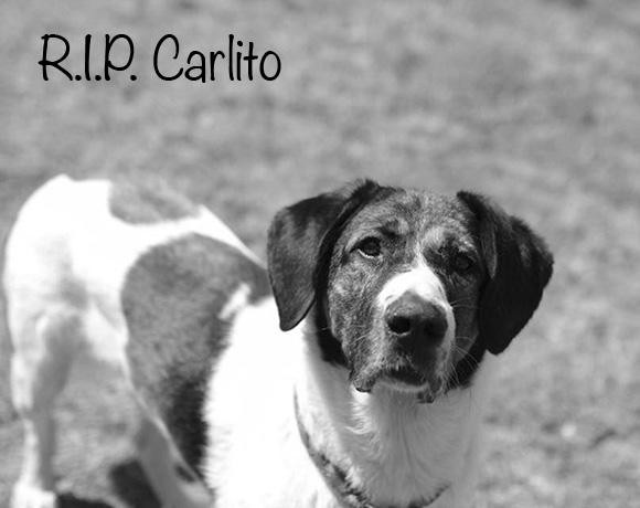 Carlito †