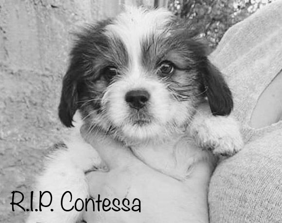 Contessa †