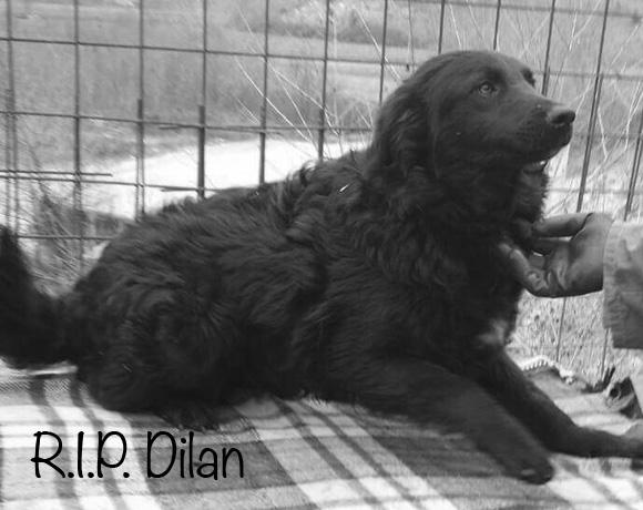 Dilan †