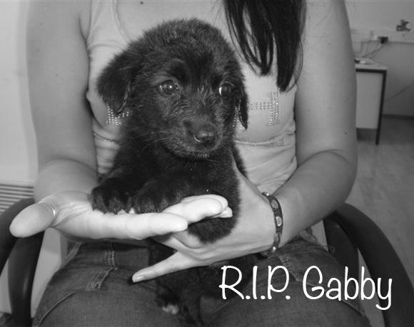 Gabby †