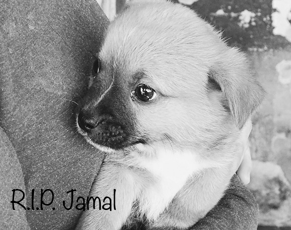 Jamal †