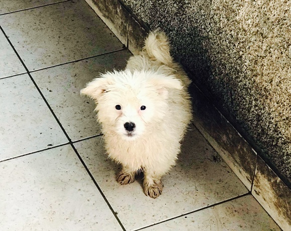 Knut †