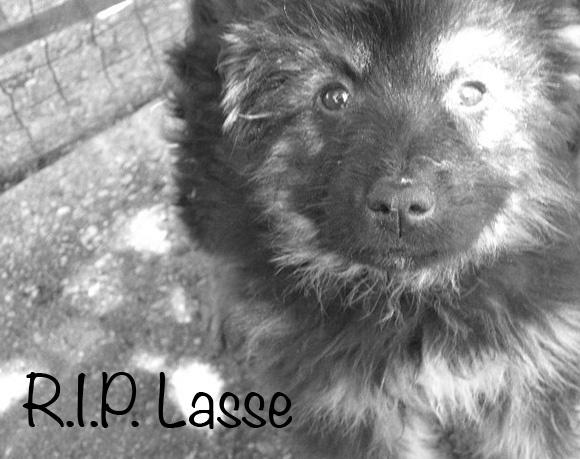 Lasse †