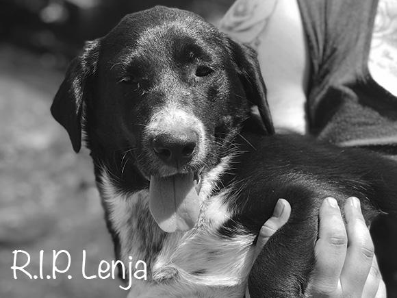 Lenja †