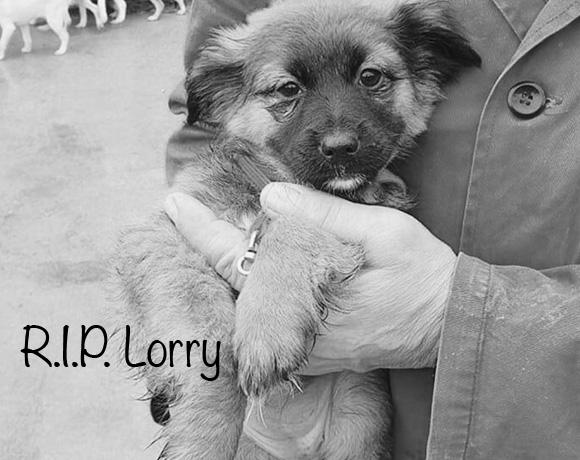 Lorry †