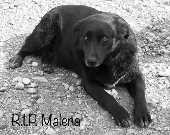 Malena †