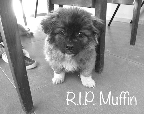 Muffin †