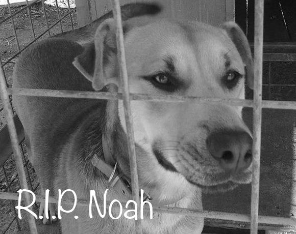 Noah †