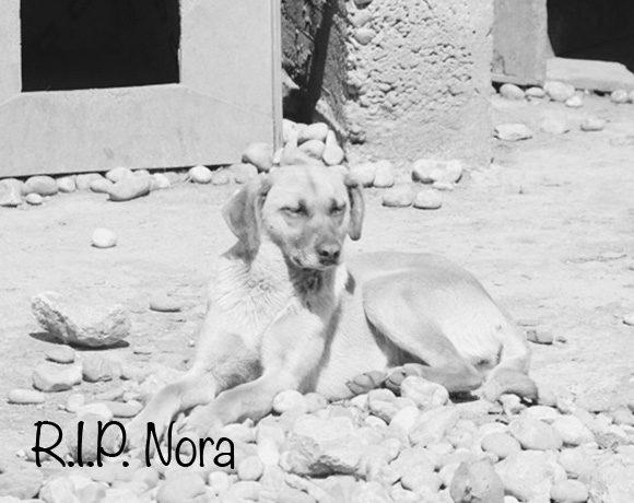 Nora †