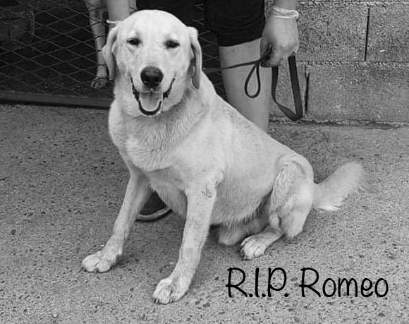 Romeo †