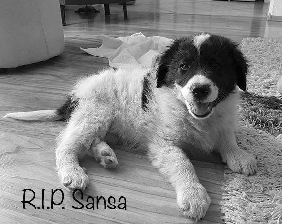 Sansa †