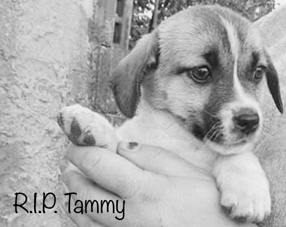 Tammy †