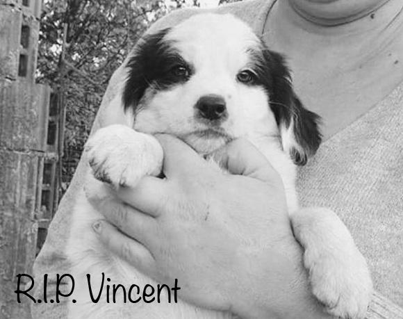Vincent †
