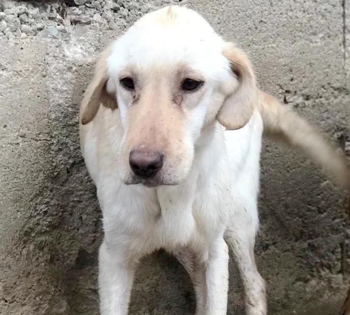 Hunden helfen und adoptieren aus dem Tierschutz Hands4Animals