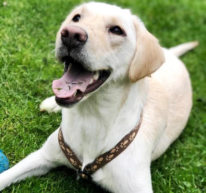 Tieren helfen im Tierschutz als Pflegestelle Hands4Animals
