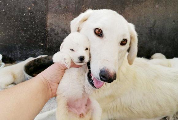 Tierpatenschaft übernehmen und Geld spenden für den guten Zweck