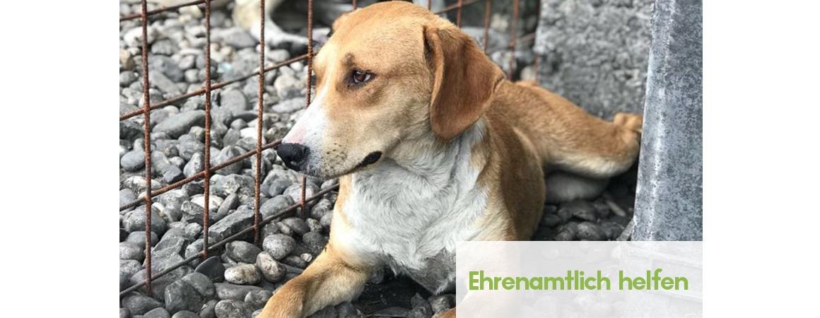 Ehrenamtlich arbeiten im Tierschutz und helfen und mit Hunden arbeiten
