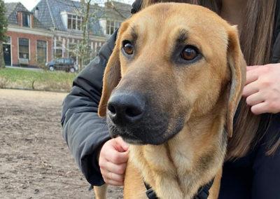 Paco in NL-9711RA Groningen