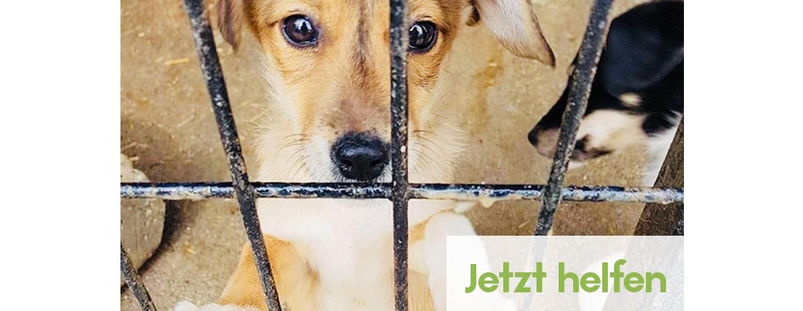Im Tierschutz helfen bei Hands4Animals