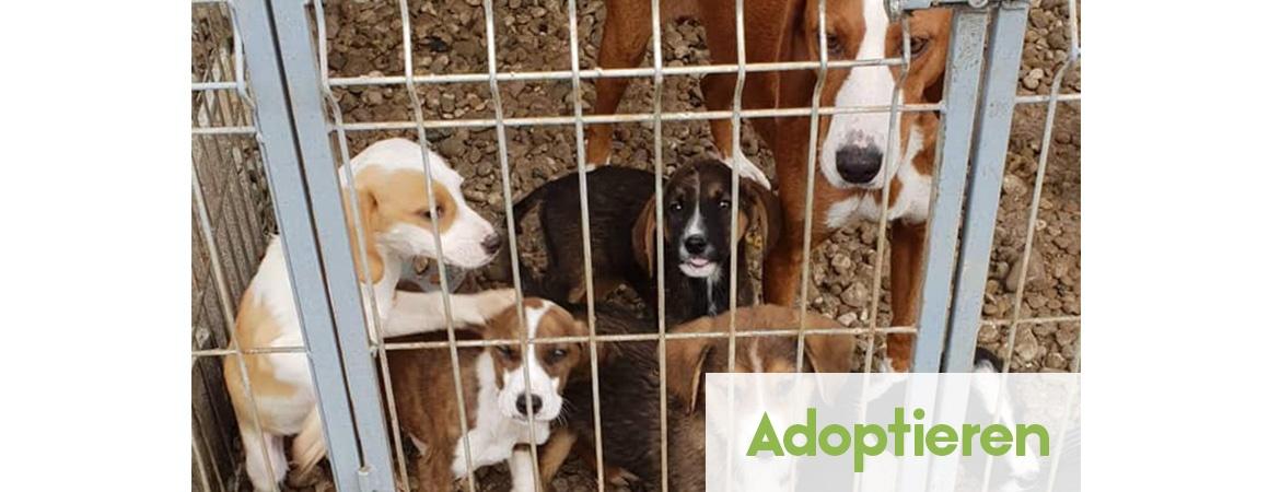 Hund adoptieren aus dem Tierschutz