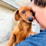 Im Tierschutz helfen und Spenden Tierschutzverein Hands4Animals