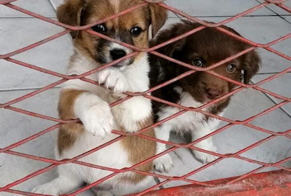 Namenspatenschaft Hund Hands4Animals