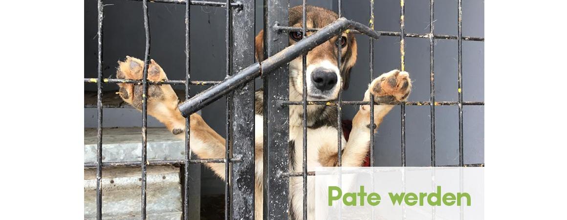 Pate Hund werden Patenschaft für einen Hund Hands4Animals