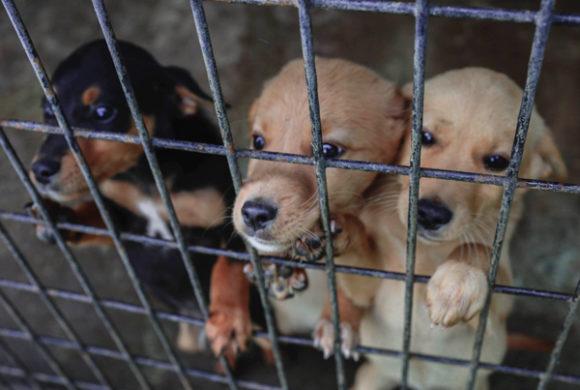 Pate werden für Hund Hands4Animals