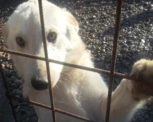 Patenschaft Hund übernehmen Tierschutz helfen Hands4Animal