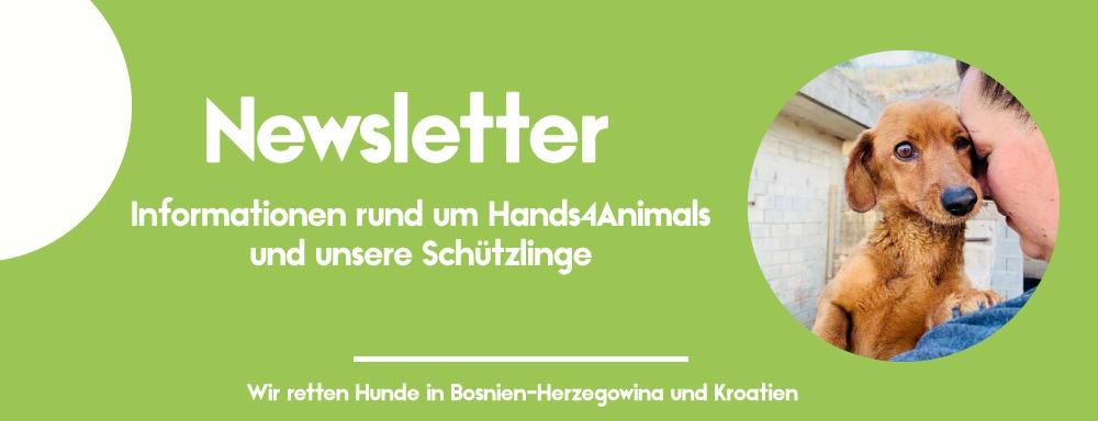 Tierschutznewsletter von Hands4Animals Banner