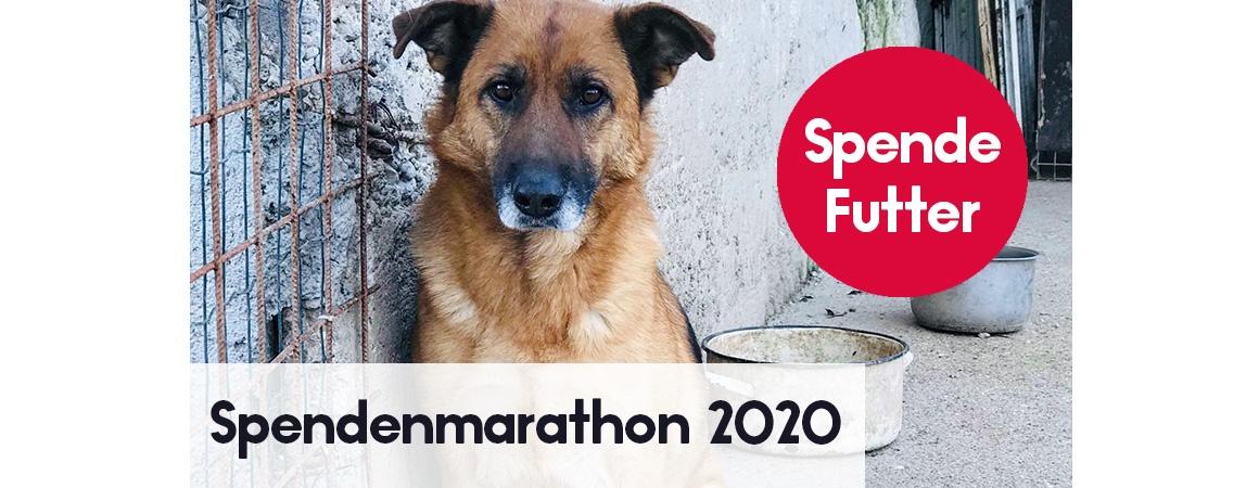 Spendenmarathon 2020 Spende Futter für Hunde im Tierschutz