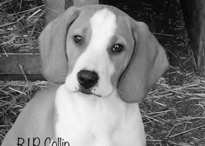 Collin †