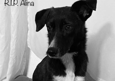 Alina †