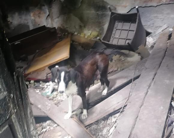 In dieser Bruchbude hatte eine Hundemama ihre 5 Babys vor der Welt in Sicherheit gebracht