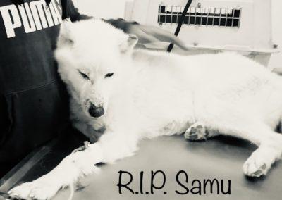 Samu †