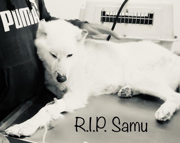 Erneut müssen wir Abschied nehmen – R.I.P. Samu