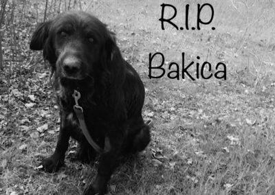Bakica †