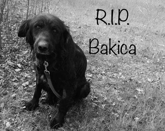 Wir hätten dir noch gerne ein paar schmerzfreie Monate geschenkt – R.I.P. Bakica