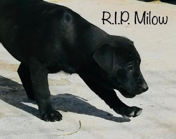 Viel zu früh müssen wir Abschied nehmen – R.I.P. Milow